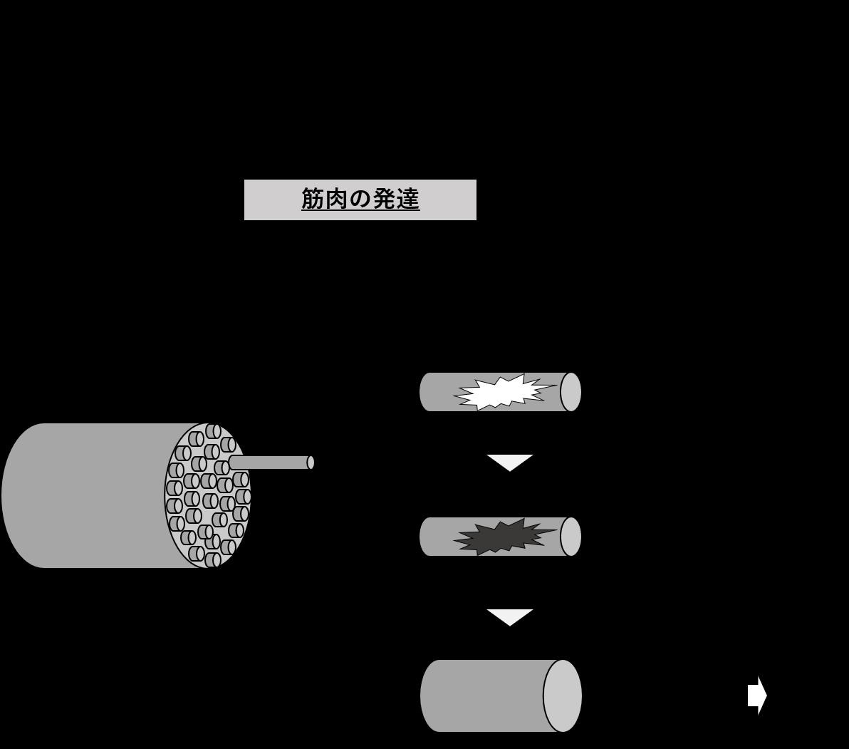 図1. 筋肉発達のしくみ