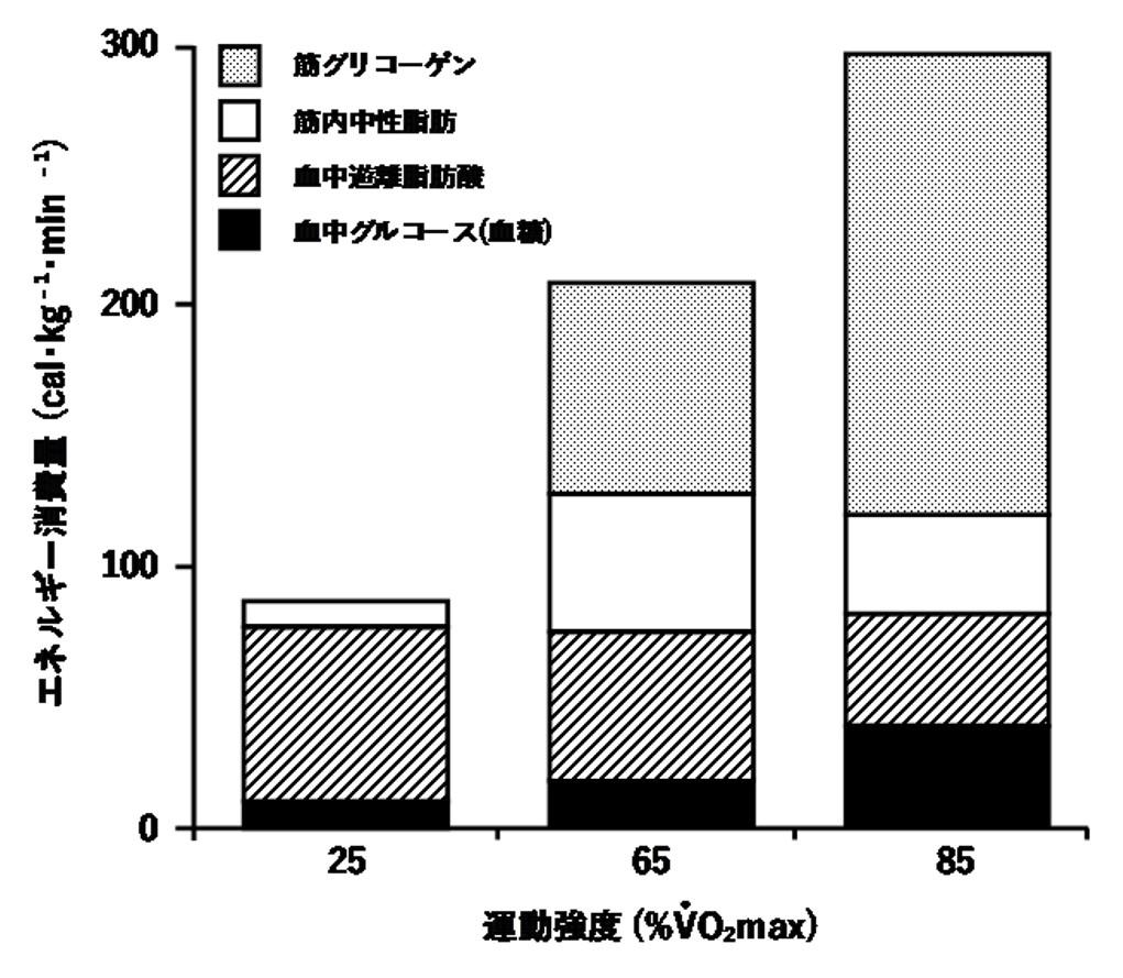 運動強度と使用エネルギー源(糖質・脂質)