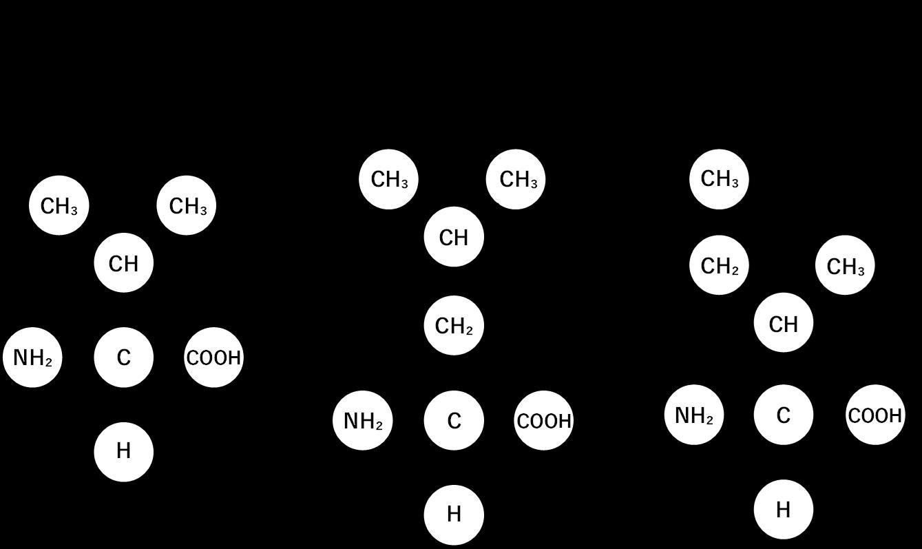 図1. BCAAの分子構造