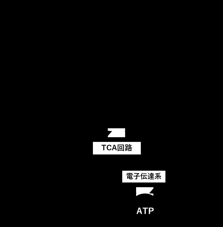 図4. 有酸素系におけるATP産生