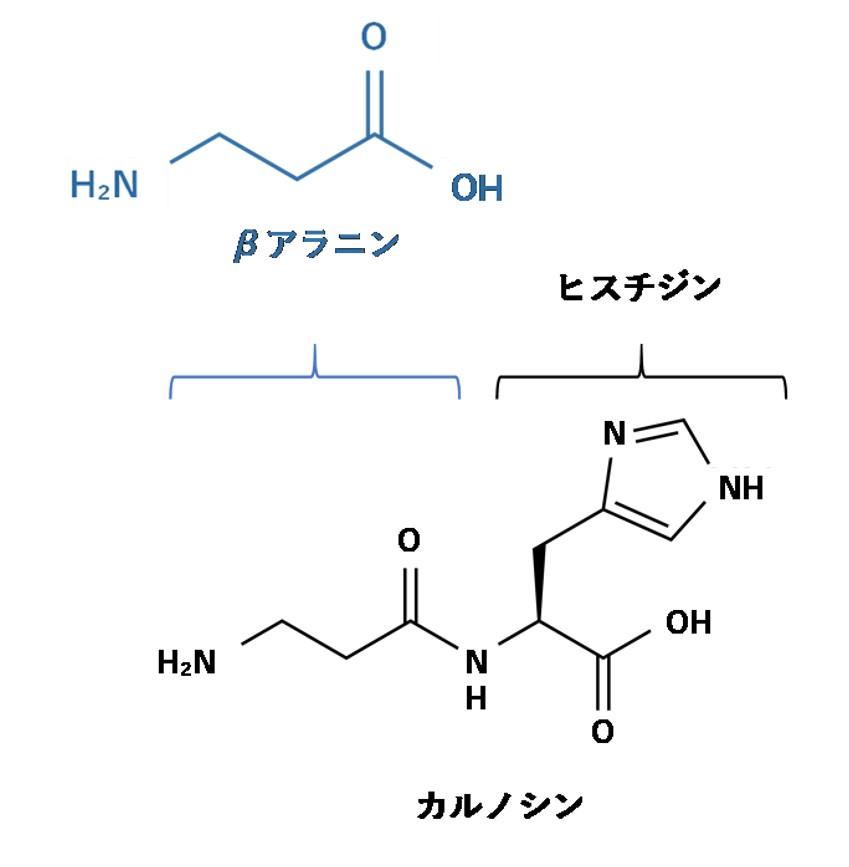 カルノシンの構造
