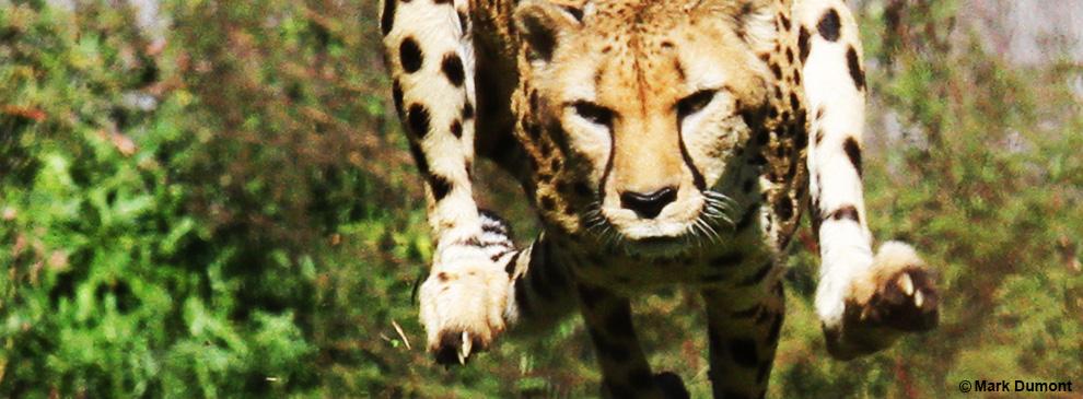 サバンナの野生動物に正月などない! キレた身体を今すぐ取り戻せ!