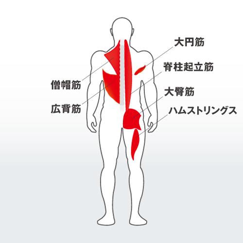 フォーカスする筋:僧帽筋、大円筋、広背筋、脊柱起立筋群、大臀筋、ハムストリングス