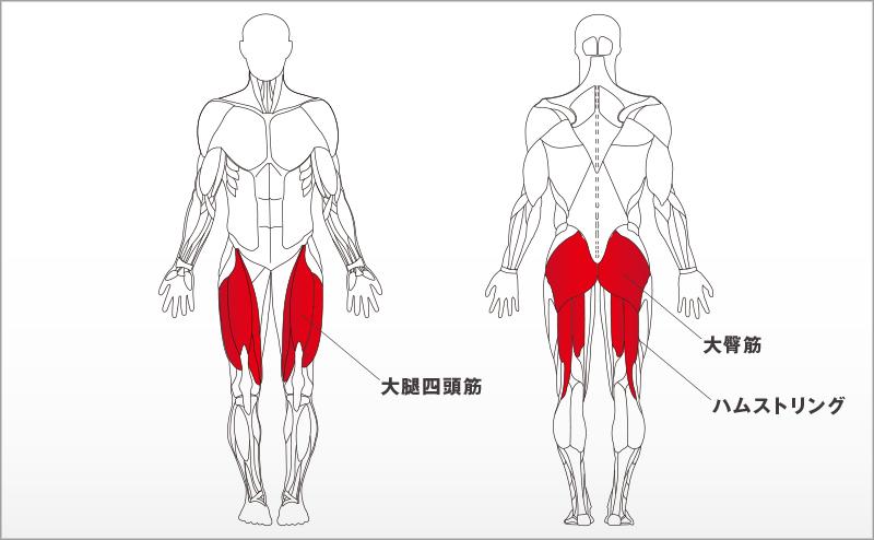 フォーカスする筋肉:大腿四頭筋、ハムストリングス、大臀筋